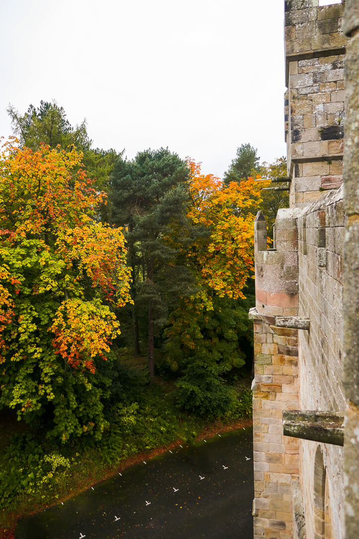 Autumn leaves in Northumberland