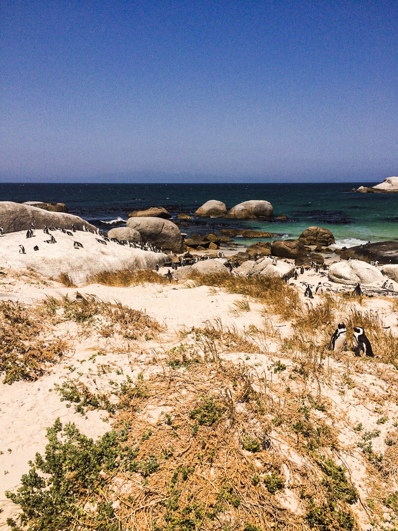 Boulders Beach in South Africa