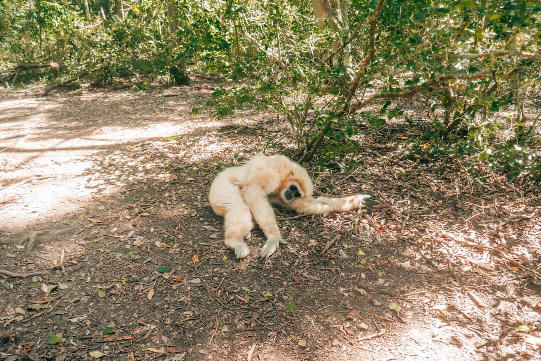 Monkeyland: Best Things to Do in Plettenberg Bay