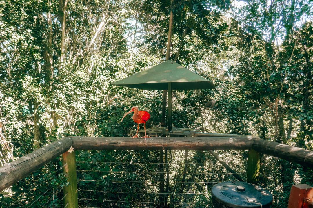 Birds of Eden: Best Things to Do in Plettenberg Bay