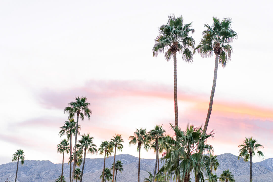 Palm trees at sunset against a mountain backdrop
